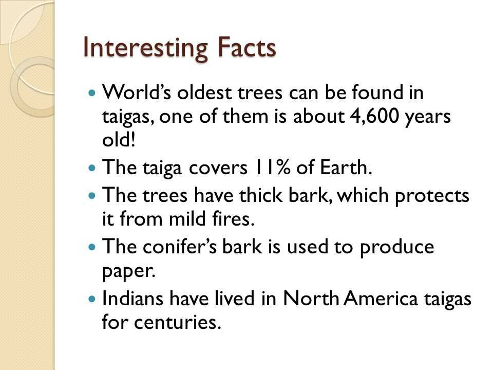 The taiga by carolyn wu ppt download for Fun facts about america