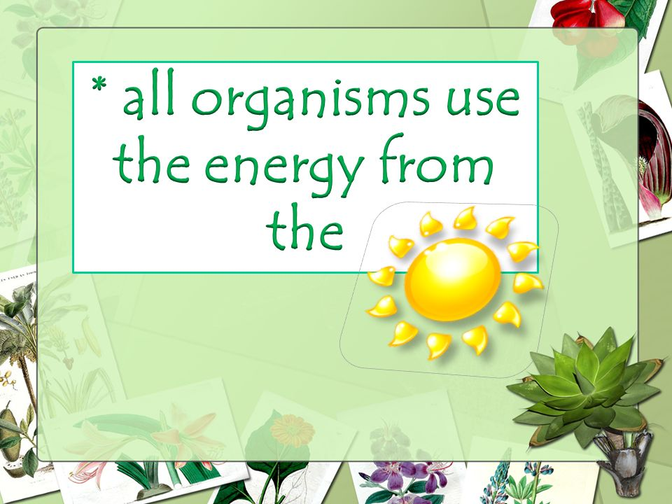 * all organisms use the energy from the