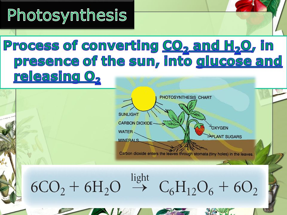 Photosynthesis Process of converting CO2 and H2O, in presence of the sun, into glucose and releasing O2.