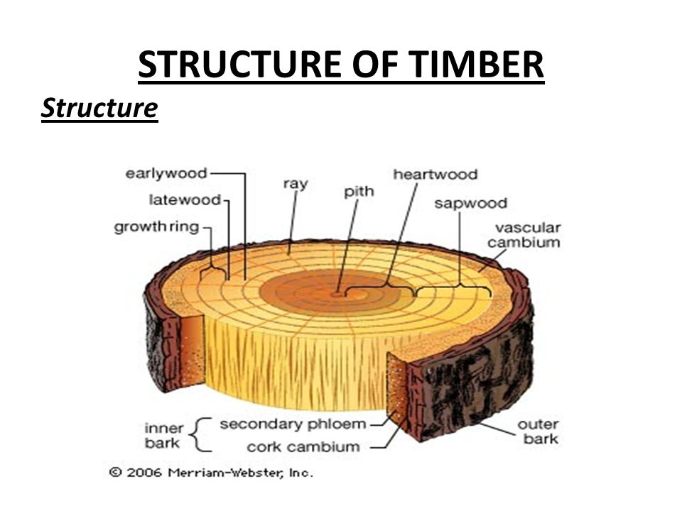 Engineering material chapter no5 timber ppt download 10 structure of timber structure ccuart Images