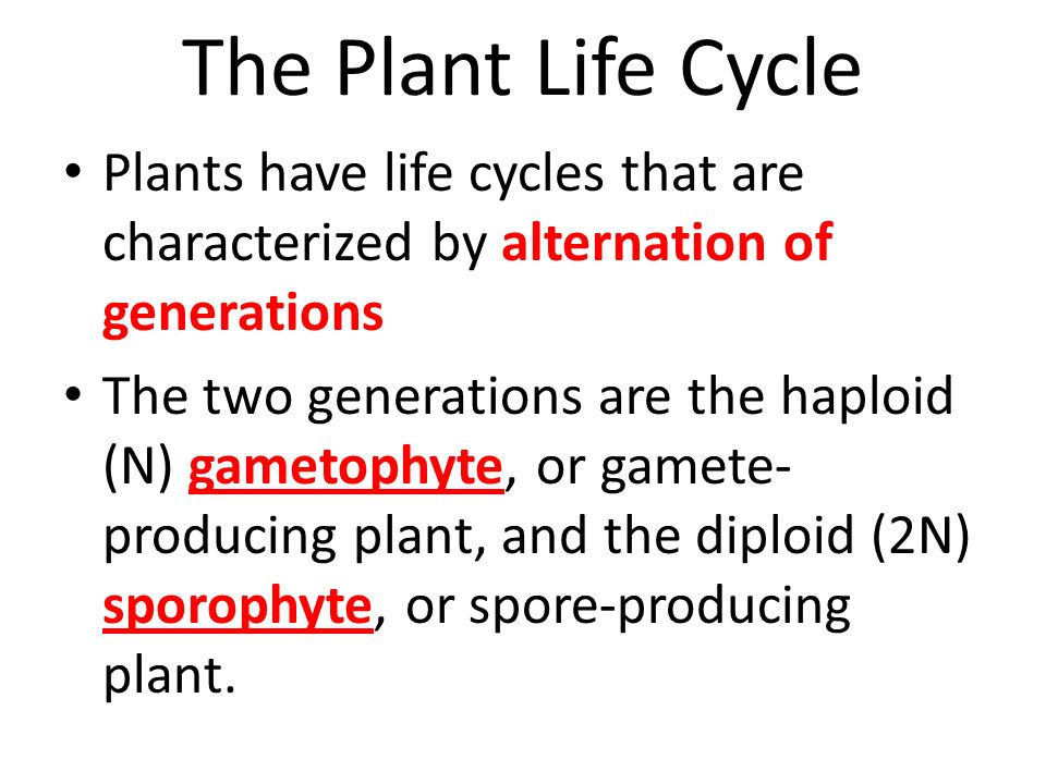 The Plant Life Cycle Plants have life cycles that are characterized by alternation of generations.
