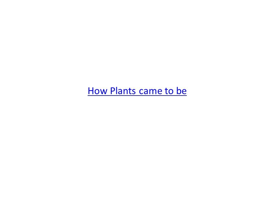 How Plants came to be