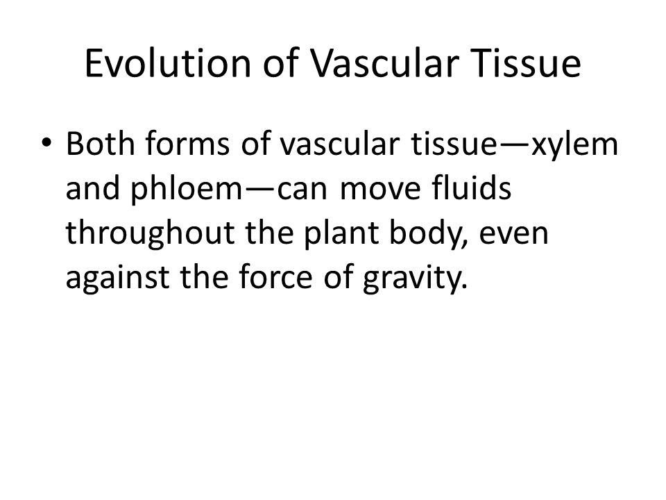 Evolution of Vascular Tissue
