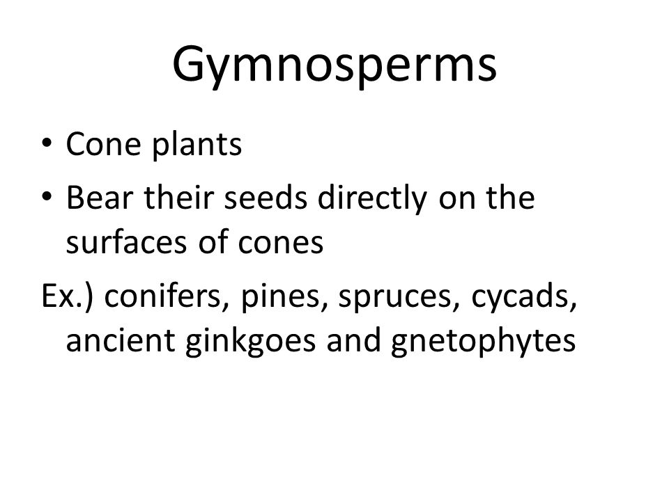 Gymnosperms Cone plants