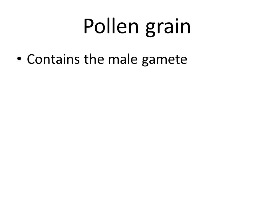 Pollen grain Contains the male gamete