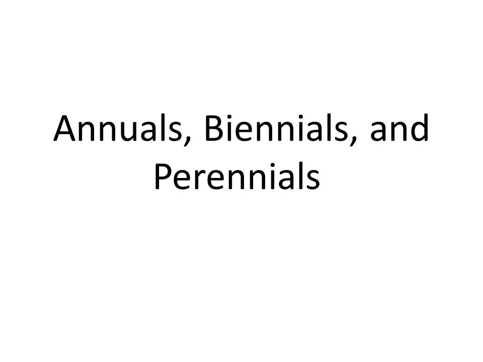 Annuals, Biennials, and Perennials