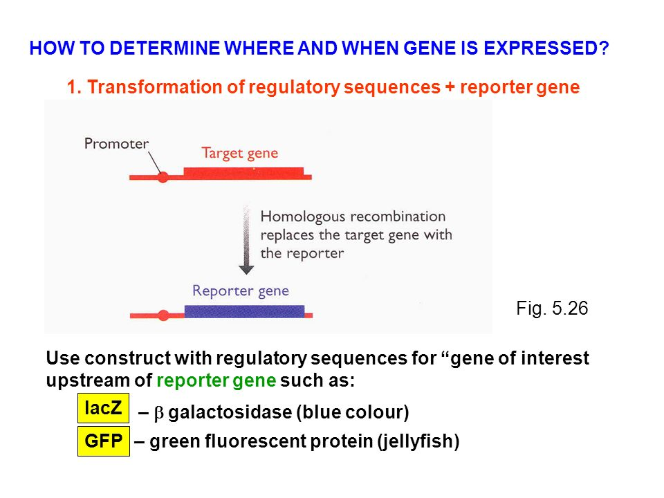 how to find where a protein is expressed