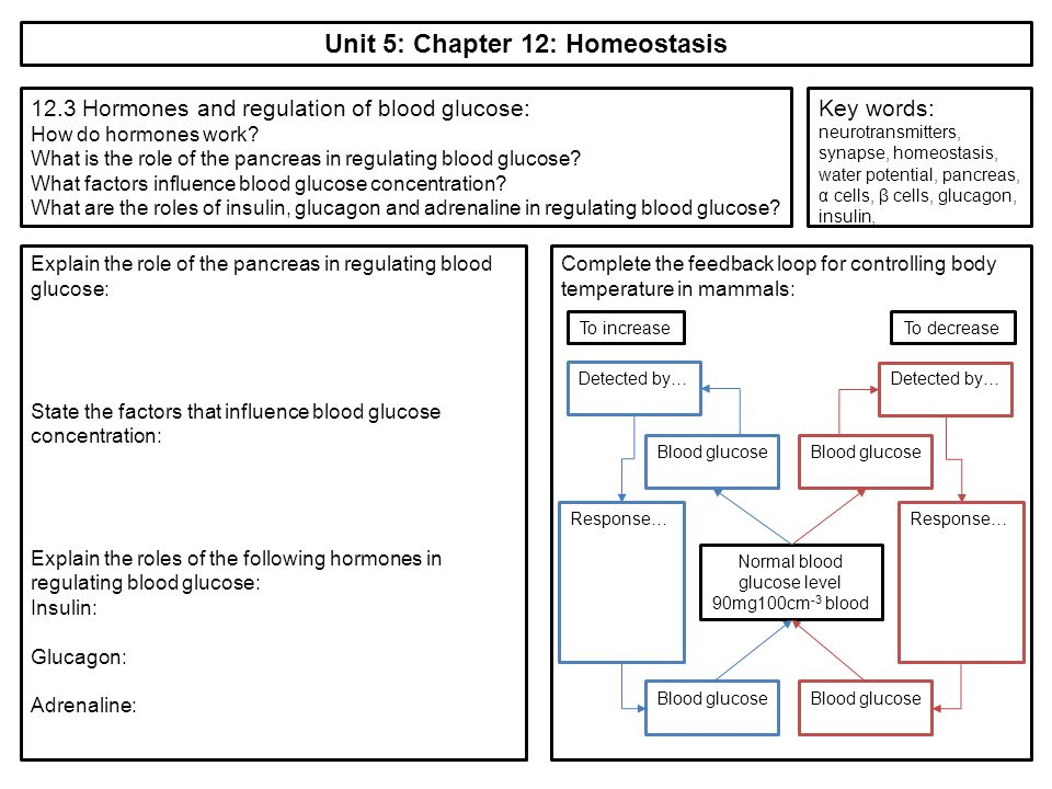 p5 unit 5 homeostasis Unit 1 lesson 5 homeostasis and cell processes how do cells get energy • plants and animals use oxygen during cellular respiration to produce energy from food.