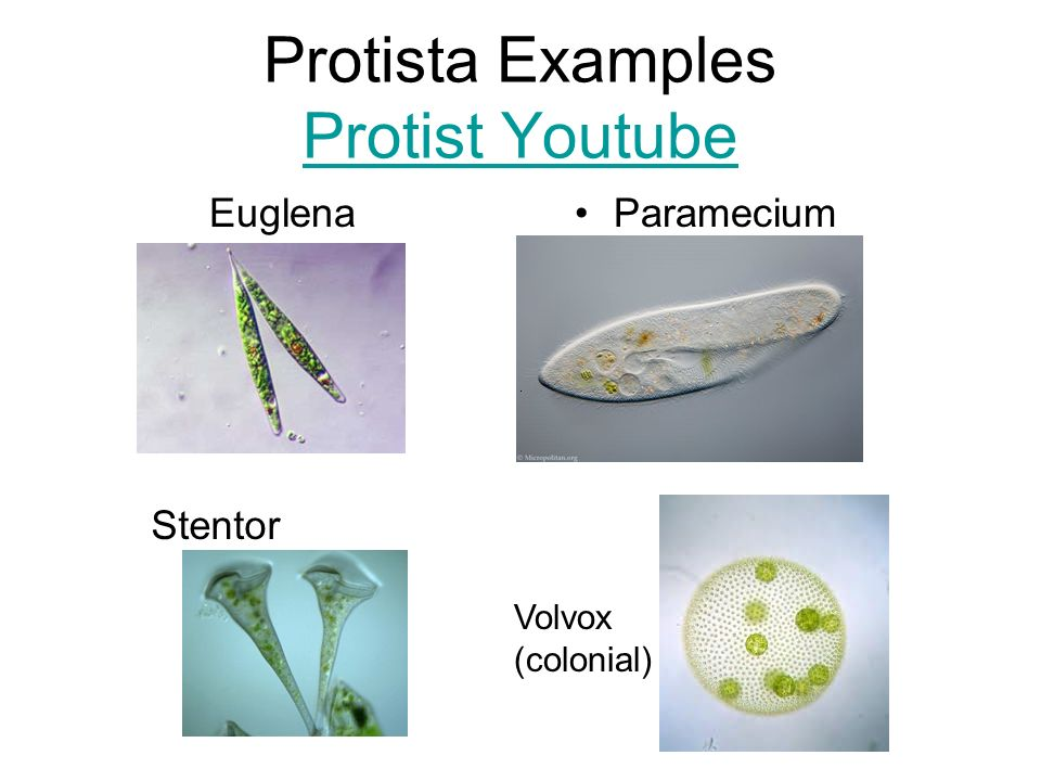 Domains, Kingdoms, and Phyla - ppt video online download