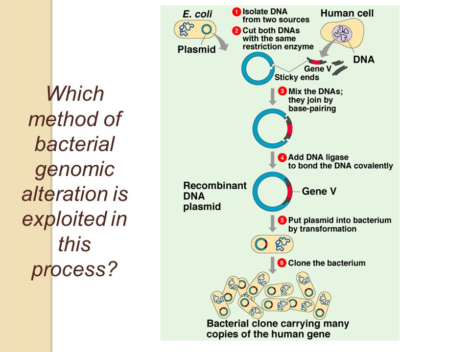 Which method of bacterial genomic alteration is exploited in this process