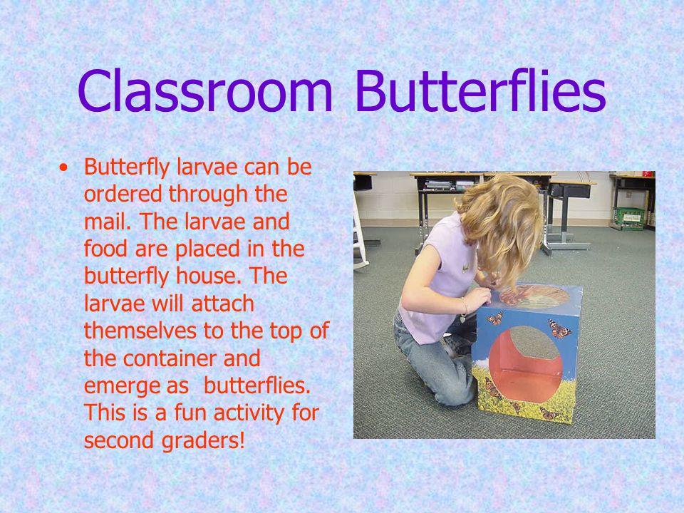 Classroom Butterflies
