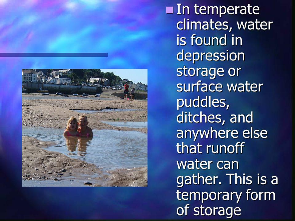In temperate climates, water is found in depression storage or surface water puddles, ditches, and anywhere else that runoff water can gather.