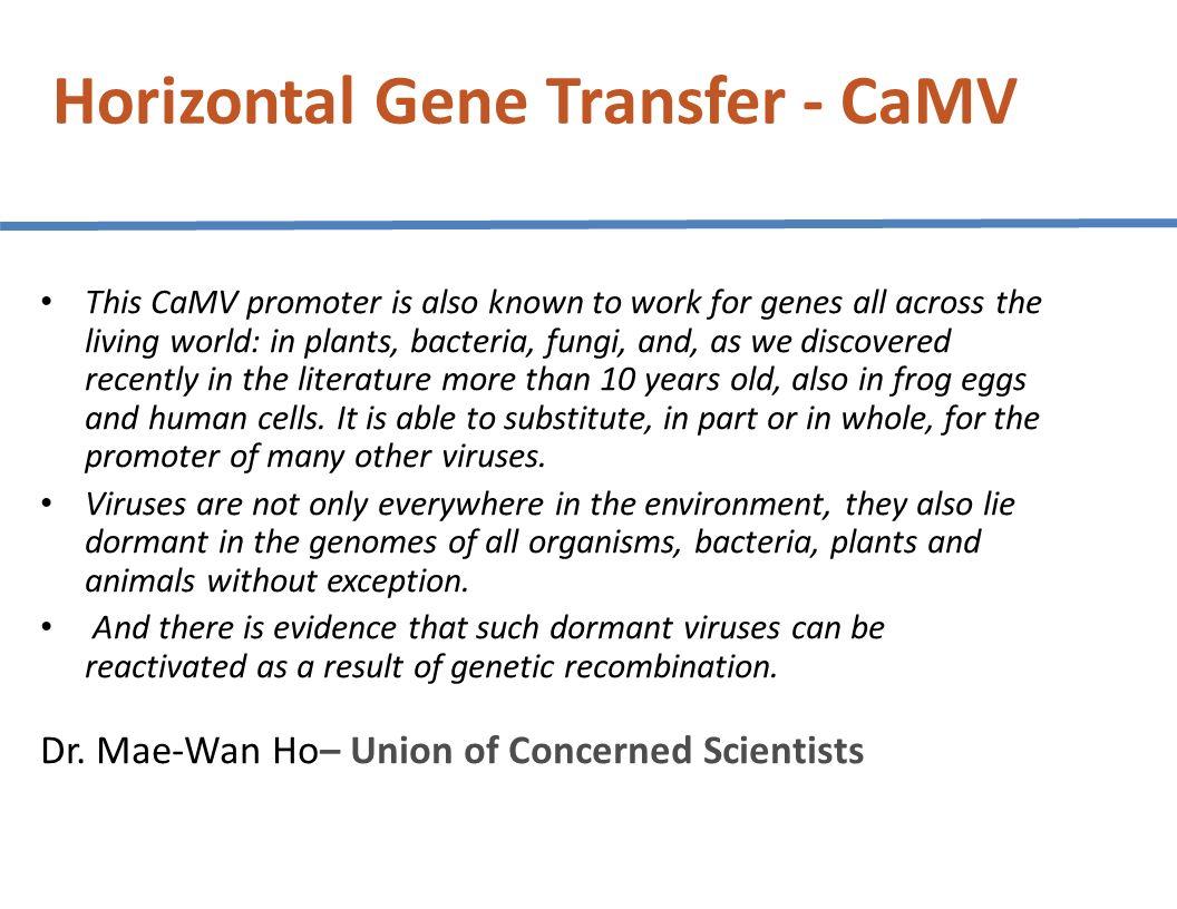 Horizontal Gene Transfer - CaMV