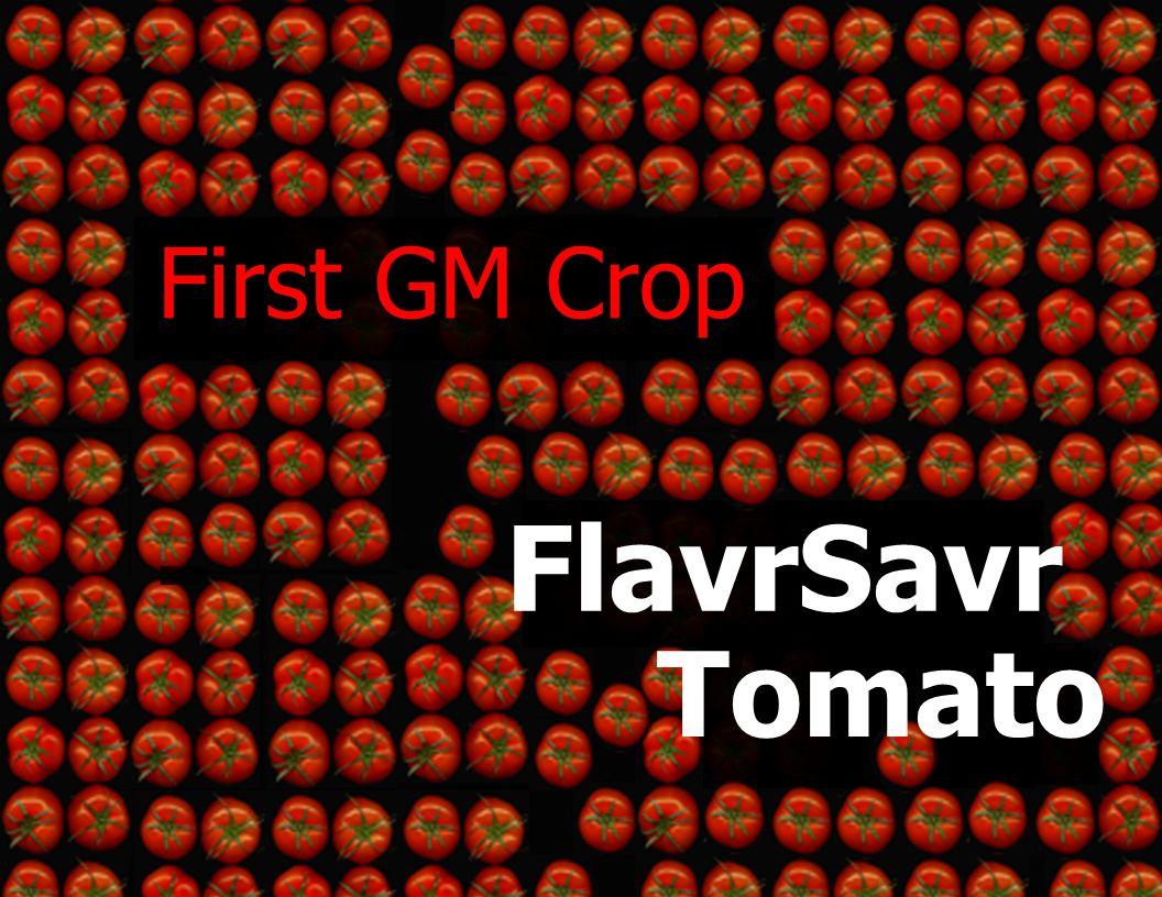 FlavrSavr Tomato First GM Crop