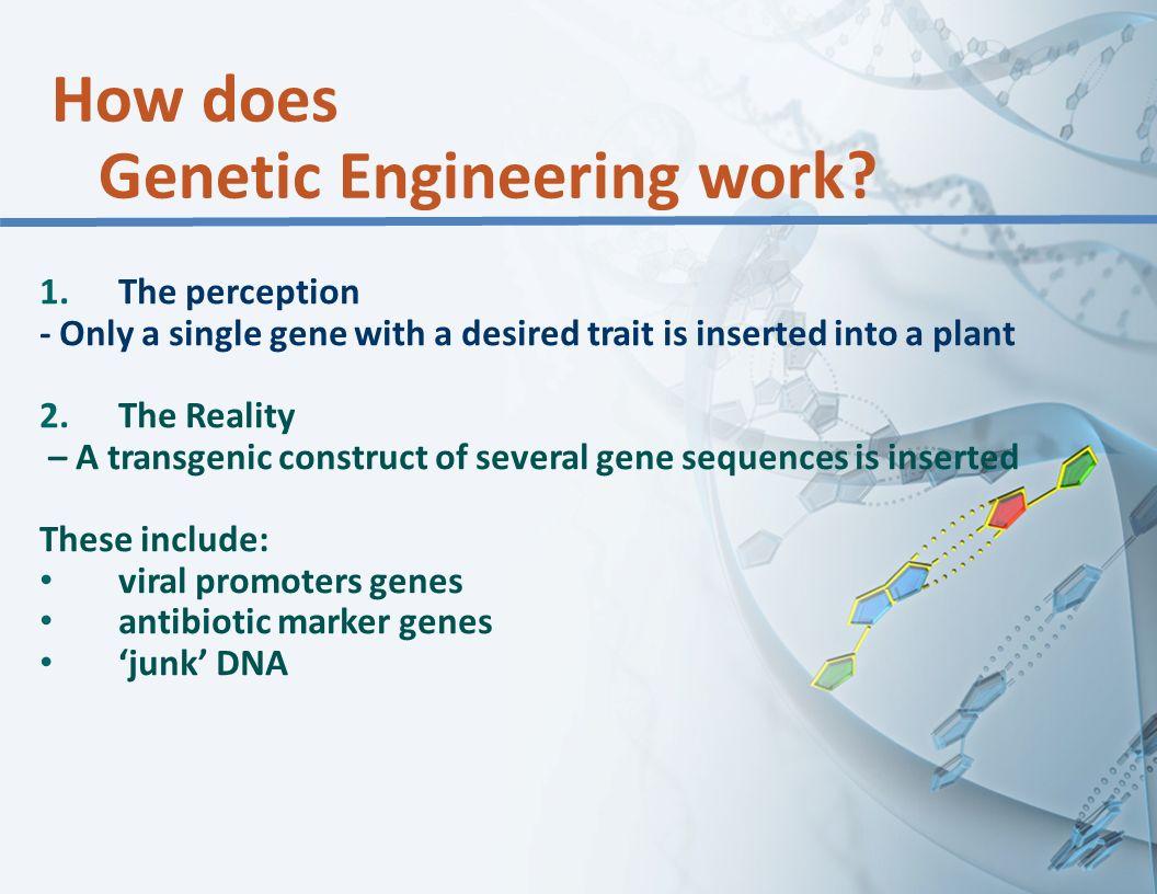How does Genetic Engineering work