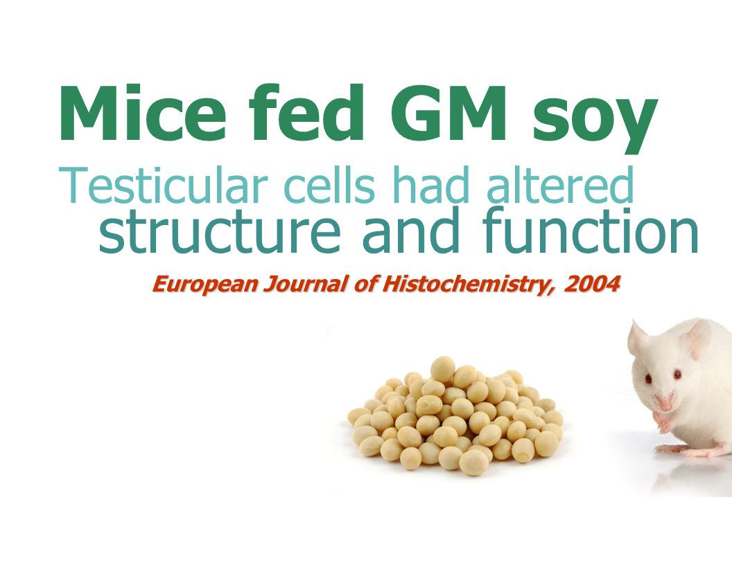 Mice fed GM soy structure and function Testicular cells had altered