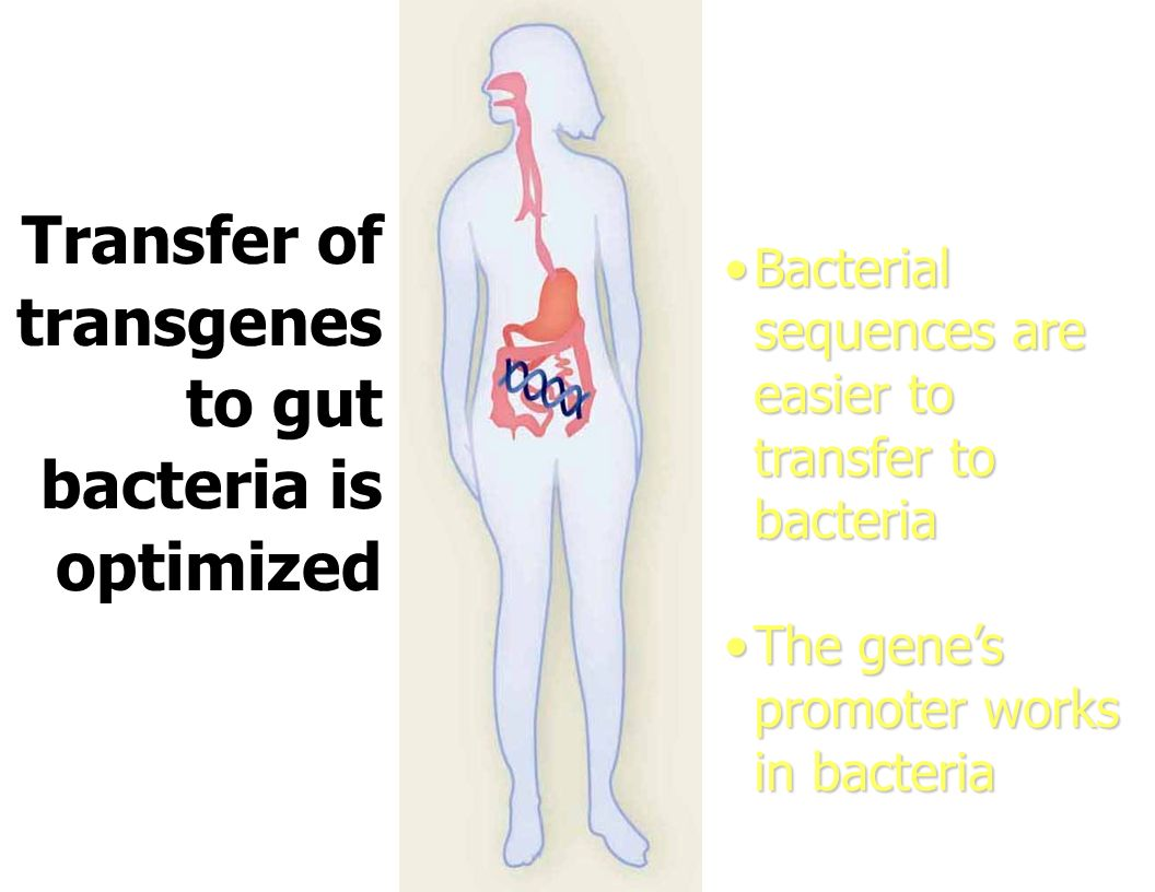 Transfer of transgenes to gut bacteria is optimized