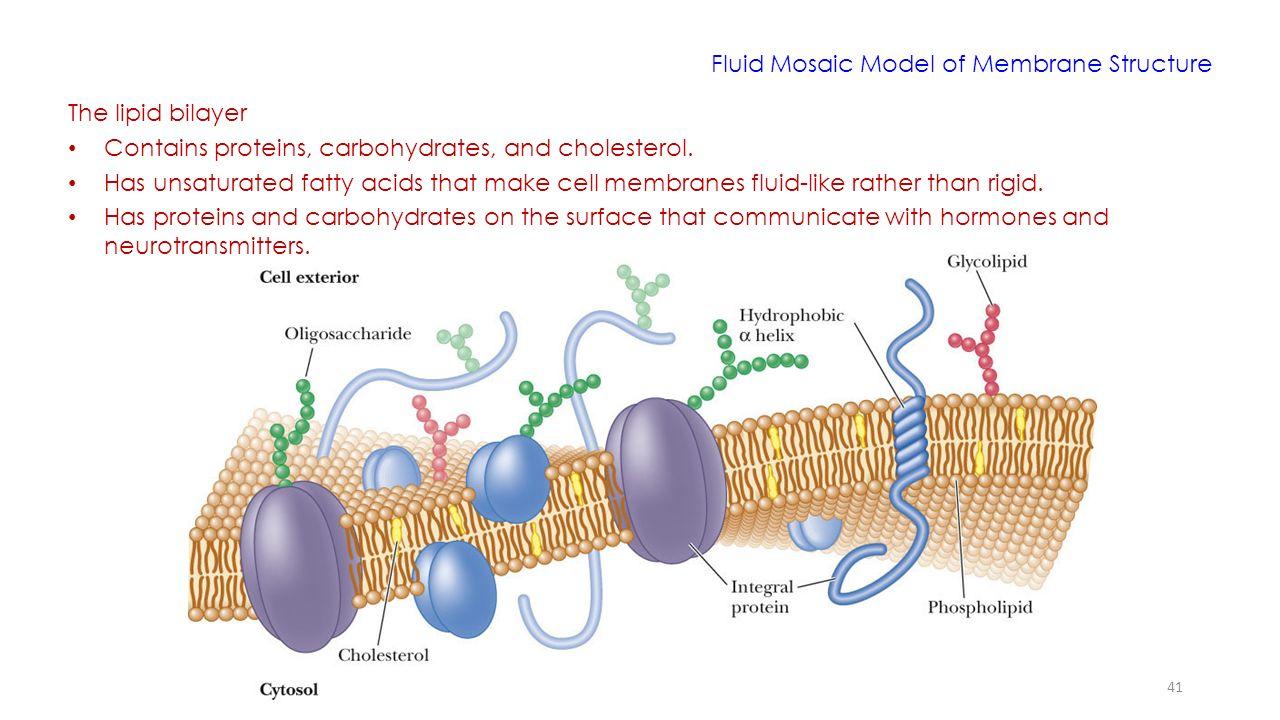 Lipids molecular structure and behavior ppt video online download 41 fluid mosaic model pooptronica