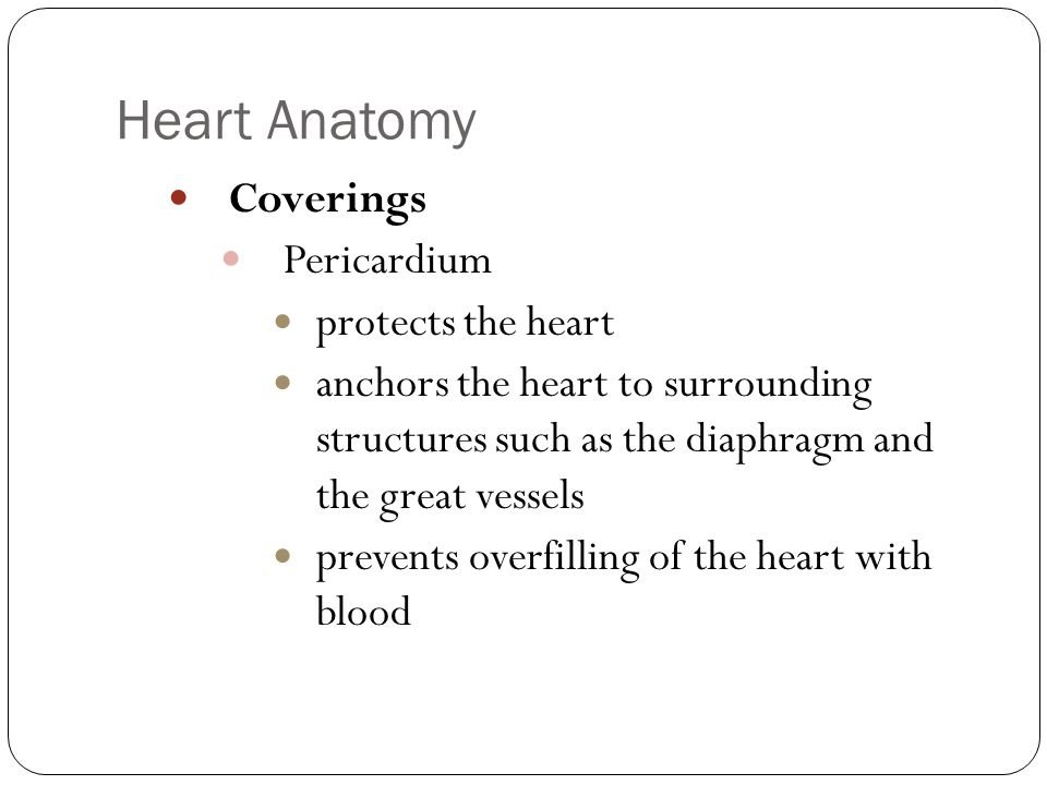 Anatomy & physiology of the heart. - ppt video online download