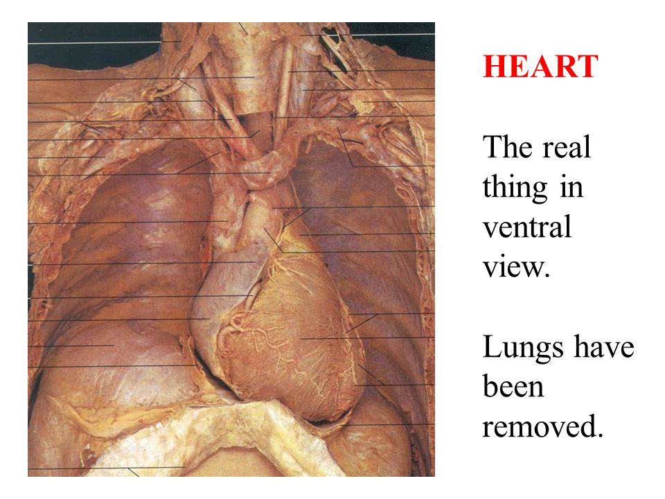 Lungs function
