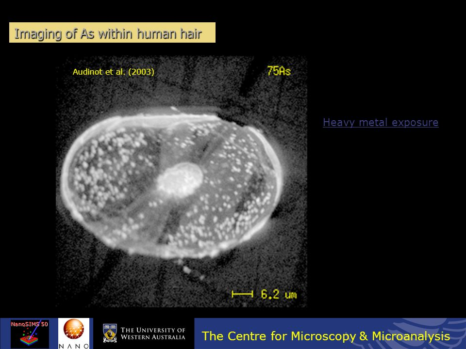 Imaging of As within human hair