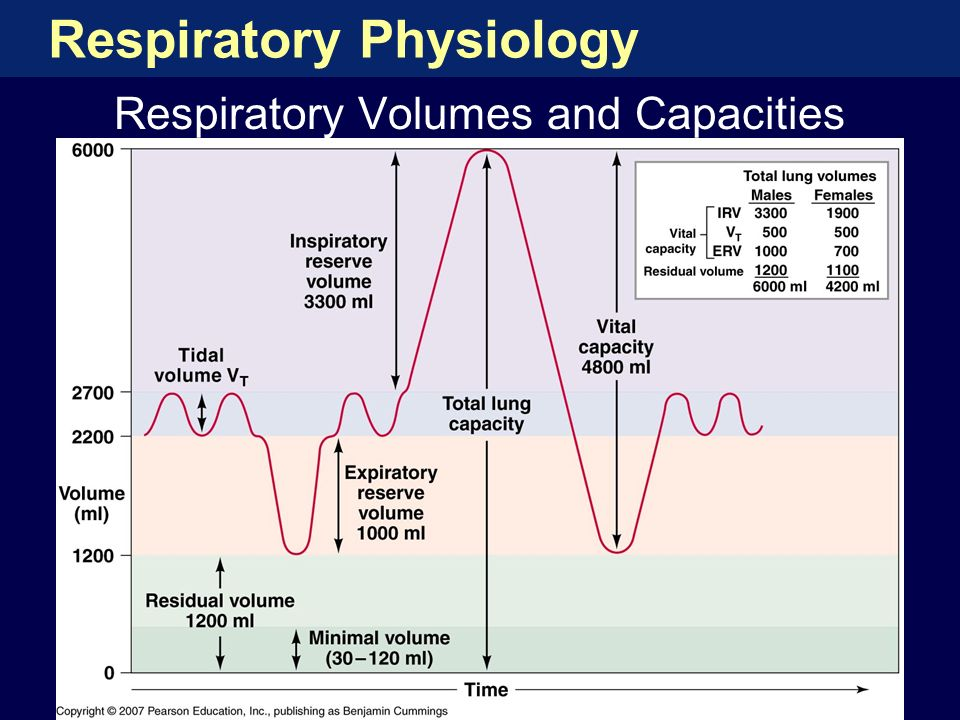 activity 8 respiratory volumes Name: ashlei sickles exercise 7: respiratory system mechanics: activity 1: measuring respiratory volumes and calculating capacities lab report.