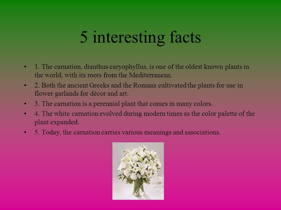 50 Interesting Facts about Plant
