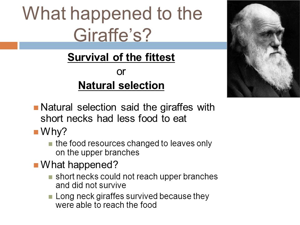 Darwin S Theory Of Natural Selection Is Too Slow