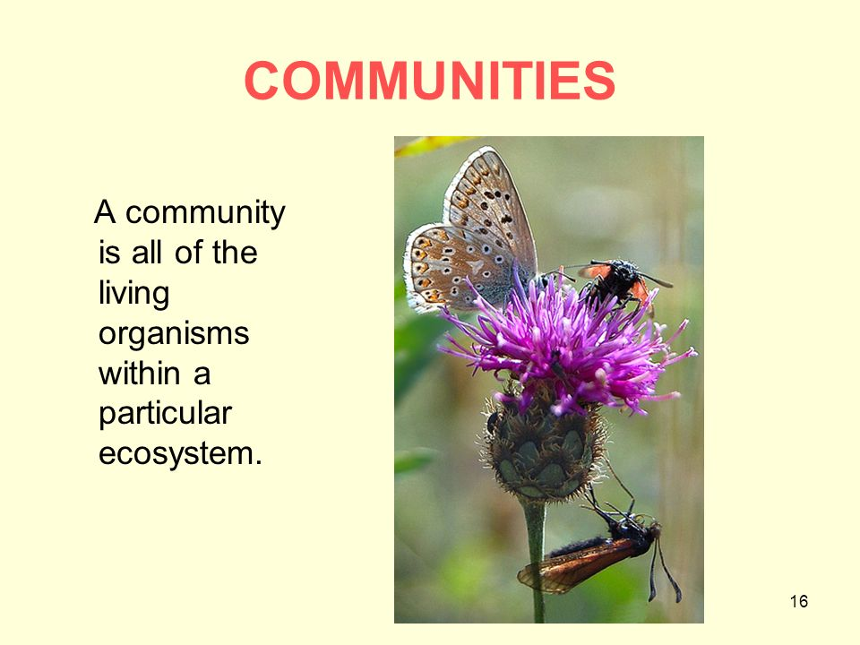 ecosystem and living organisms • biotic factors – the living parts of an ecosystem  levels of organization within an ecosystem a  particular area make up an ecosystem organisms live in a.