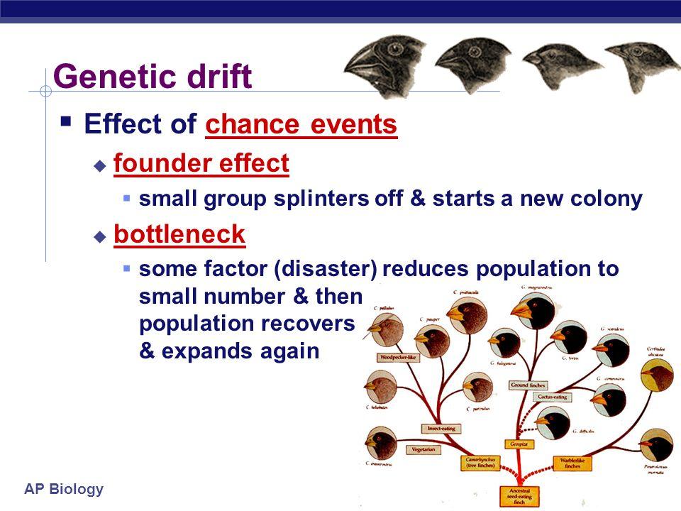 Genetic Drift Natural Disaster