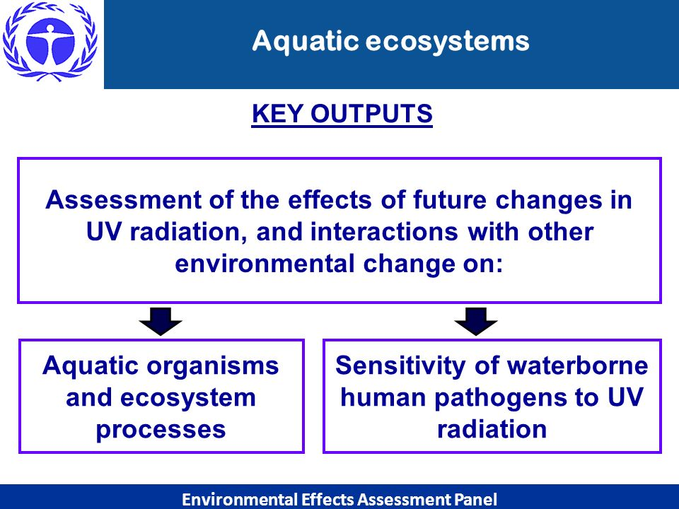 Aquatic ecosystems KEY OUTPUTS. Assessment of the effects of future changes in UV radiation, and interactions with other environmental change on: