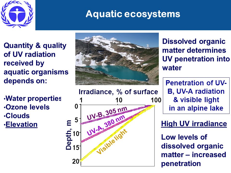 Penetration of UV-B, UV-A radiation & visible light