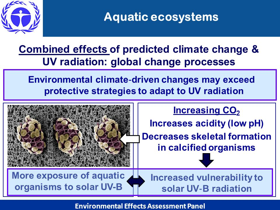 Aquatic ecosystems Combined effects of predicted climate change & UV radiation: global change processes.