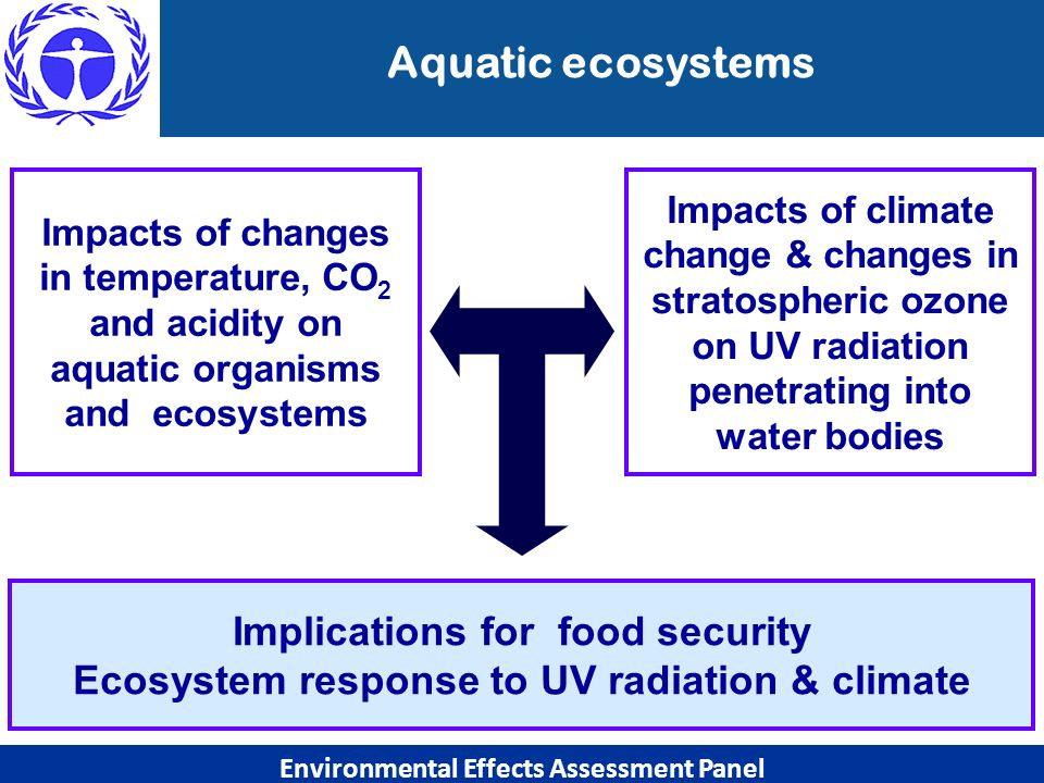 Aquatic ecosystems Implications for food security