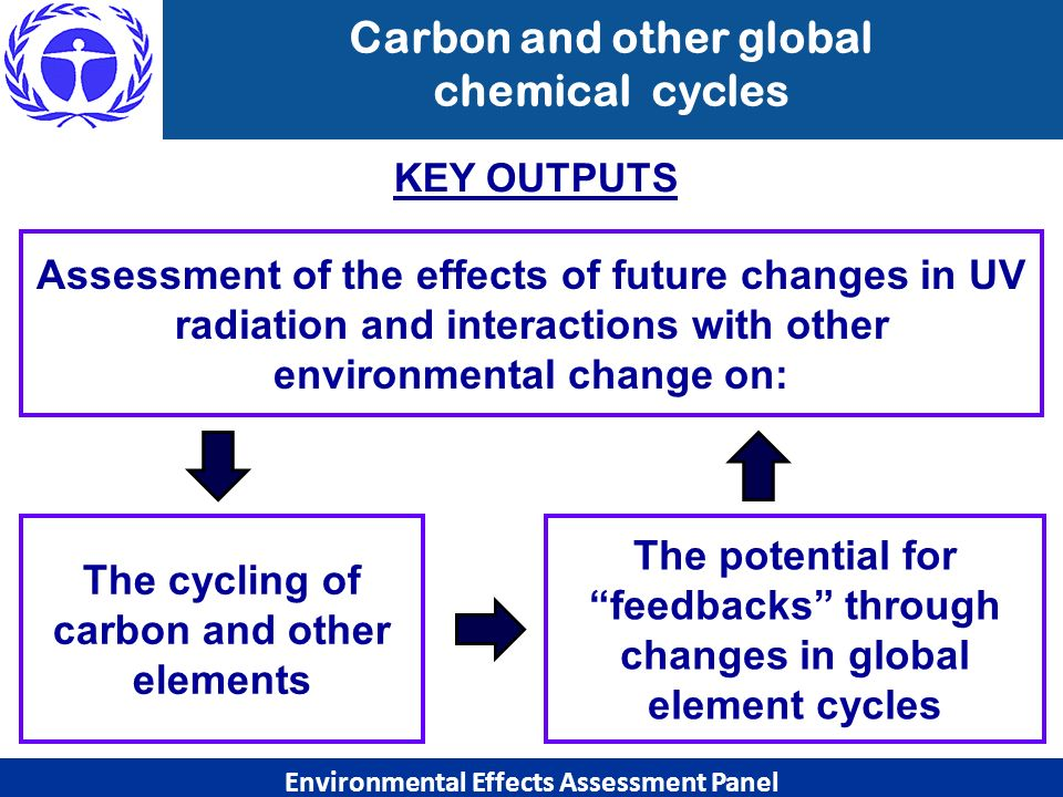 Carbon and other global chemical cycles