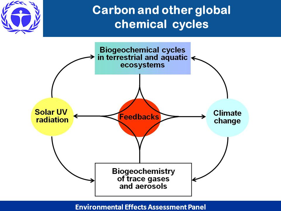 Carbon and other global Environmental Effects Assessment Panel