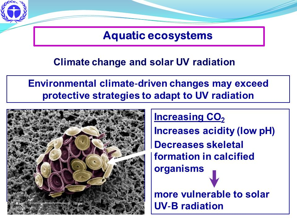 Aquatic ecosystems Climate change and solar UV radiation