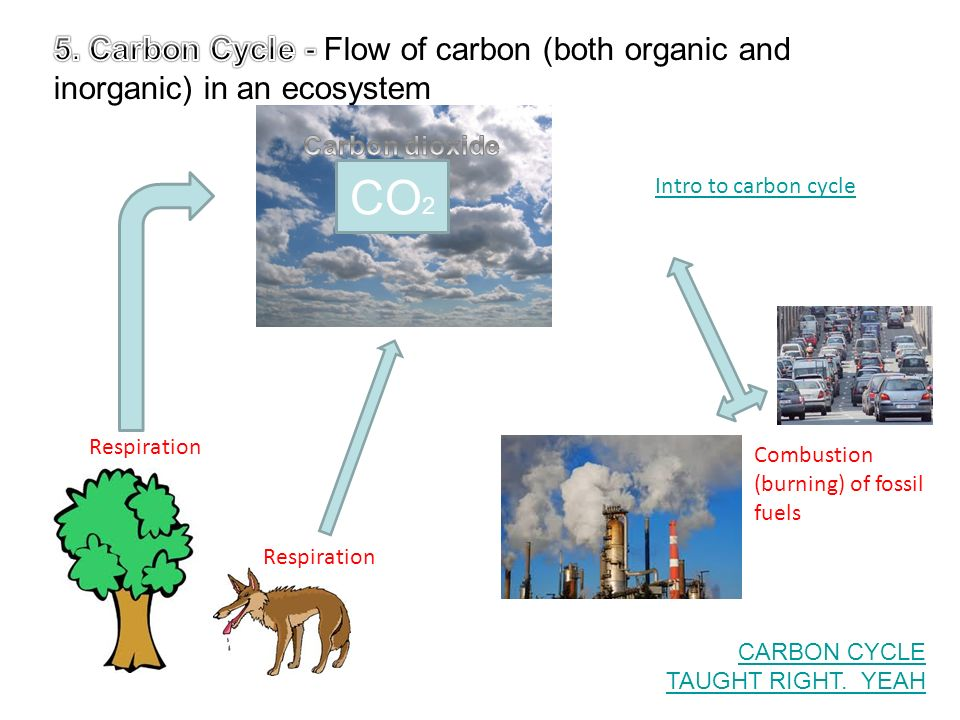 carbon cycle in ecosystem pdf