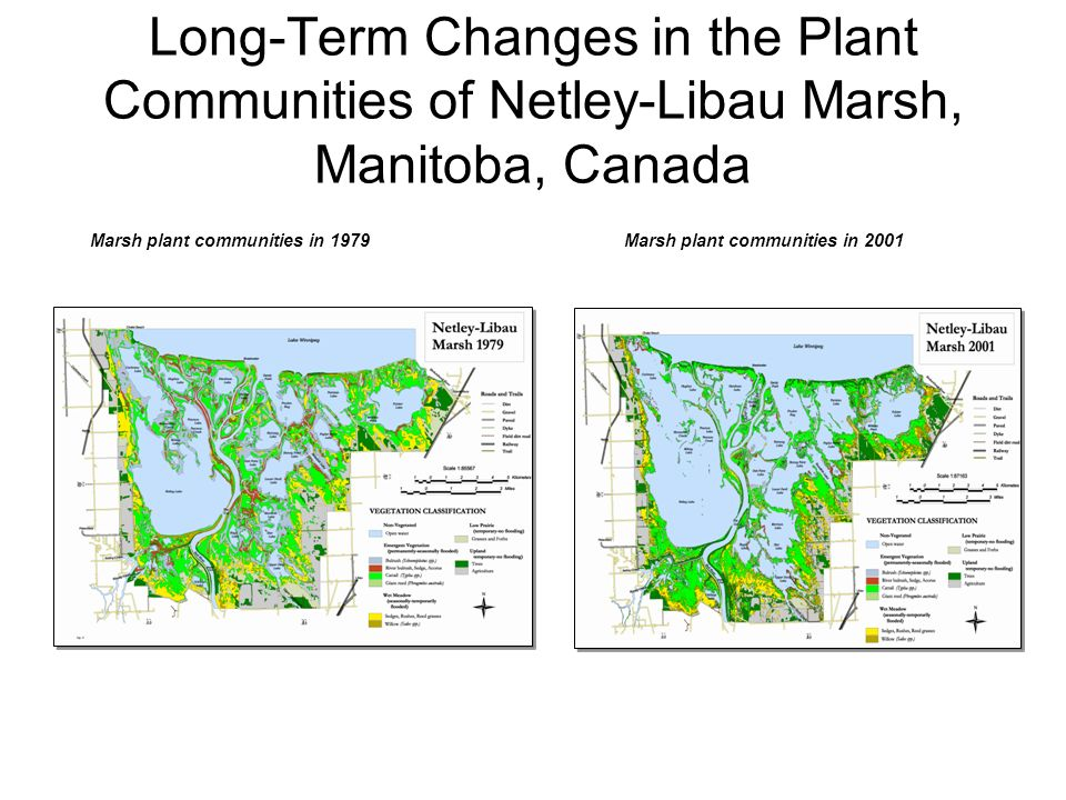 Long-Term Changes in the Plant Communities of Netley-Libau Marsh, Manitoba, Canada