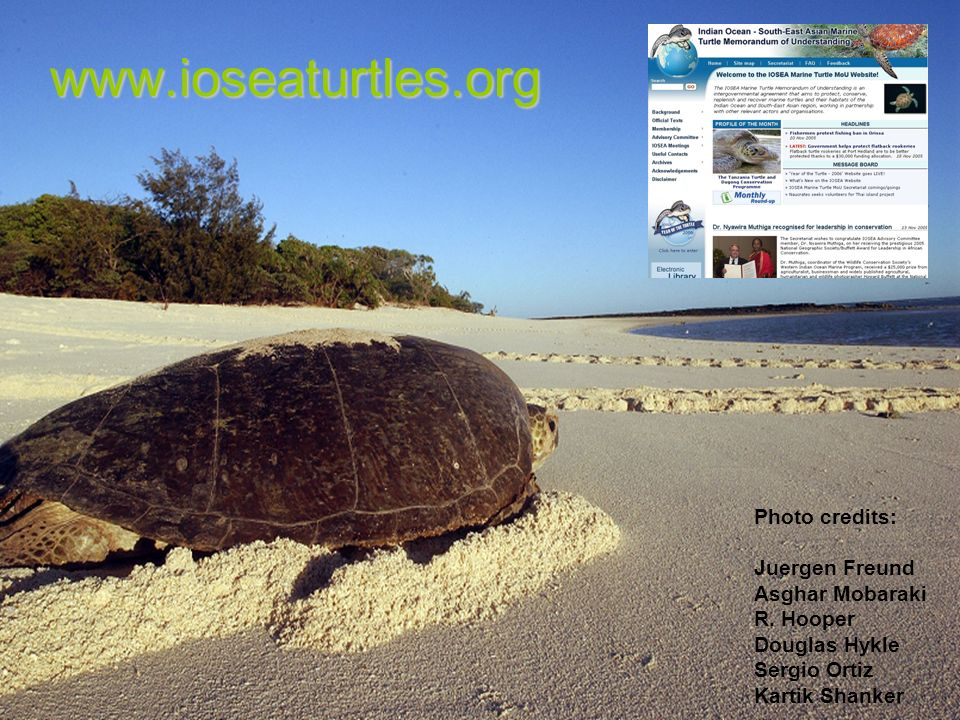 www.ioseaturtles.org Photo credits: Juergen Freund Asghar Mobaraki