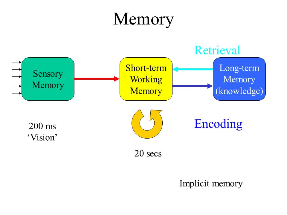 Short Term And Long Term Memory : Memory working long term implicit