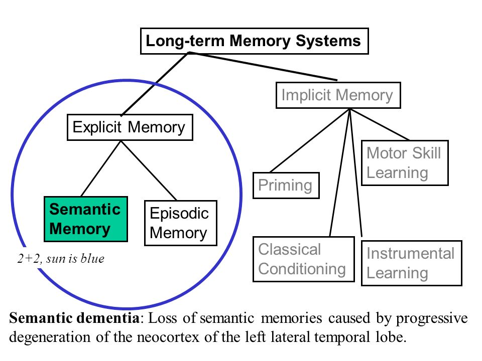 long term memory and critical thinking skills What Is the Connection between Long-Term Memory and Critical Thinking?