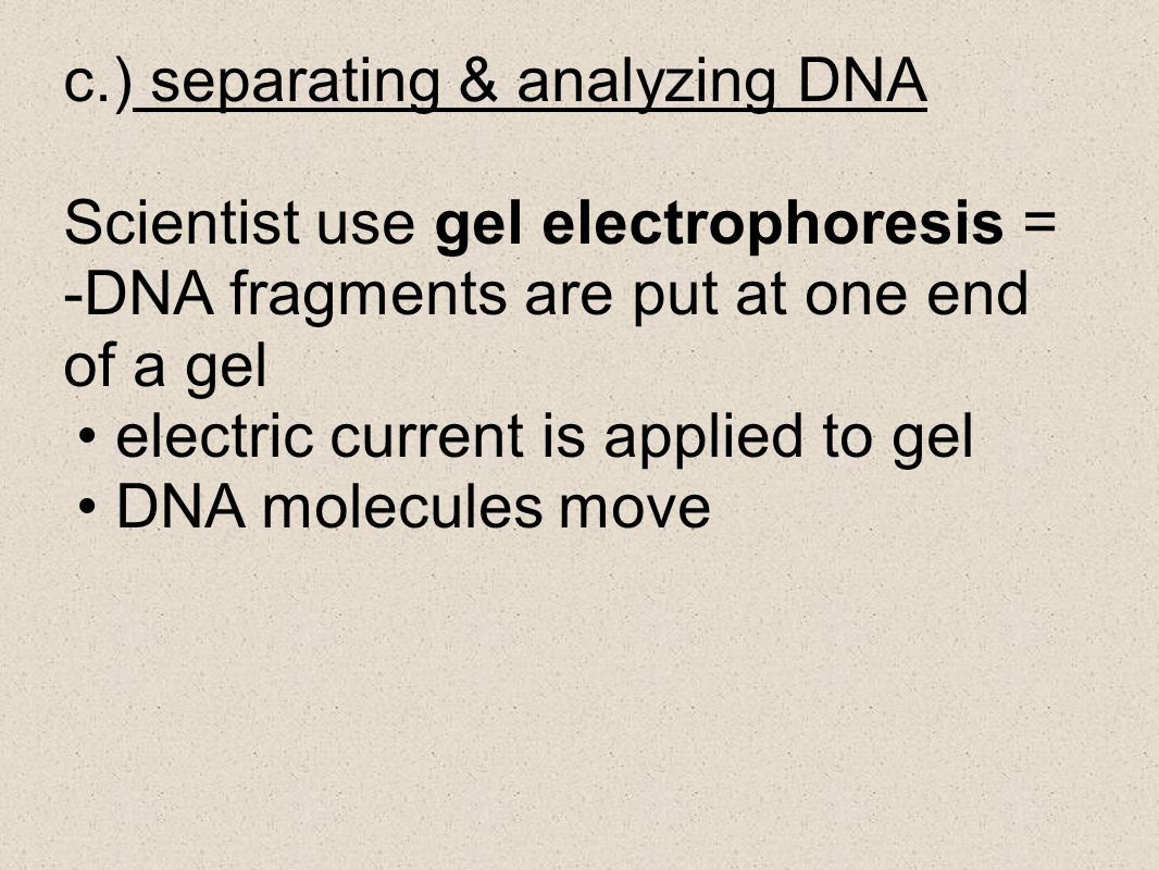 c.) separating & analyzing DNA