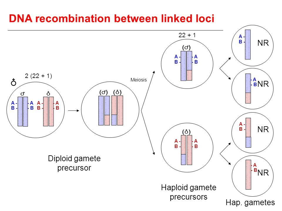 DNA recombination between linked loci
