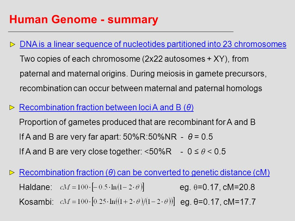 Human Genome - summary DNA is a linear sequence of nucleotides partitioned into 23 chromosomes.