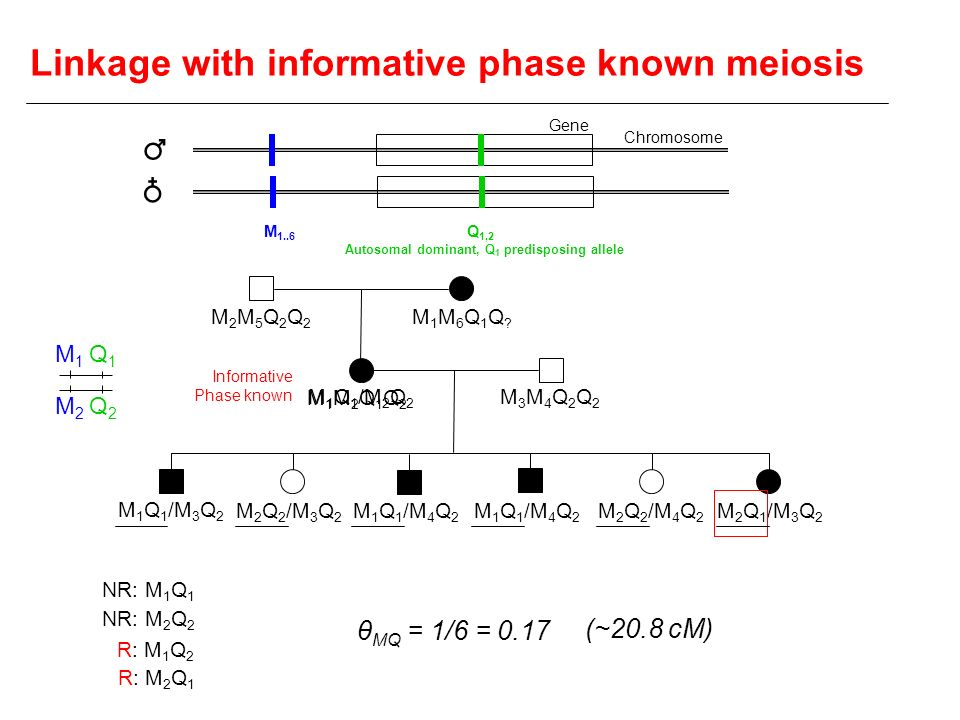 Autosomal dominant, Q1 predisposing allele