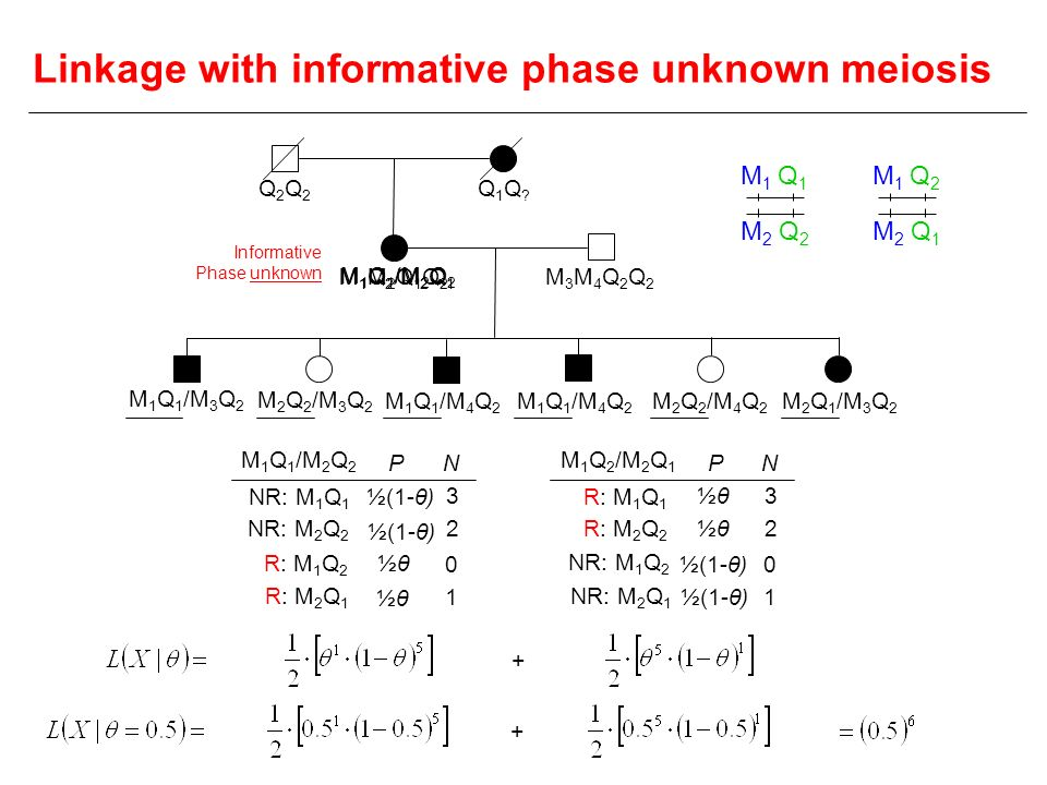 Linkage with informative phase unknown meiosis