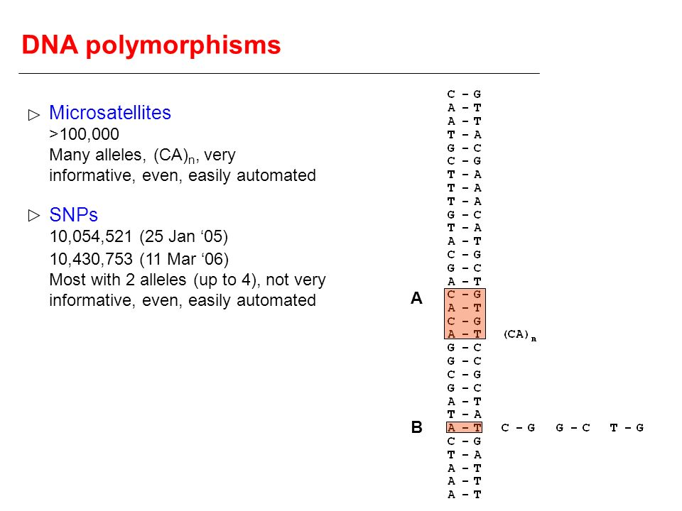 DNA polymorphisms Microsatellites SNPs >100,000