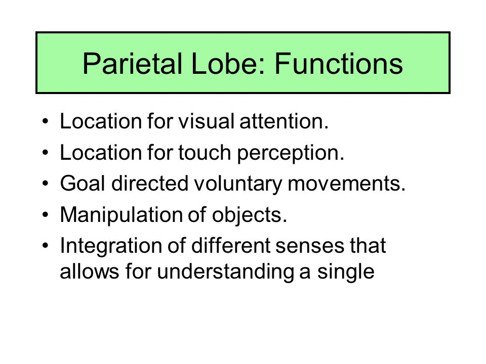 Parietal Lobe: Functions