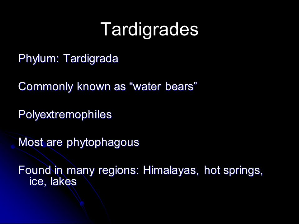 Tardigrades Phylum: Tardigrada Commonly known as water bears